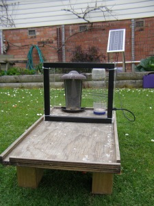 One of our experimental bird feeding stations, complete with radio antenna for scanning PIT-tagged birds, in the garden of a volunteer household