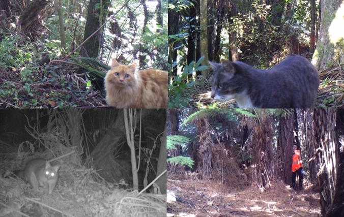 Photos from cat camera pilot study, clockwise from top left: two cats, MSc student Sam Lincoln and a possum. Cats were photographed visiting both parks during the day and night.
