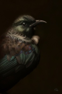 Tui Art by Cally Whitham https://www.behance.net/gallery/native-endemic/5061863