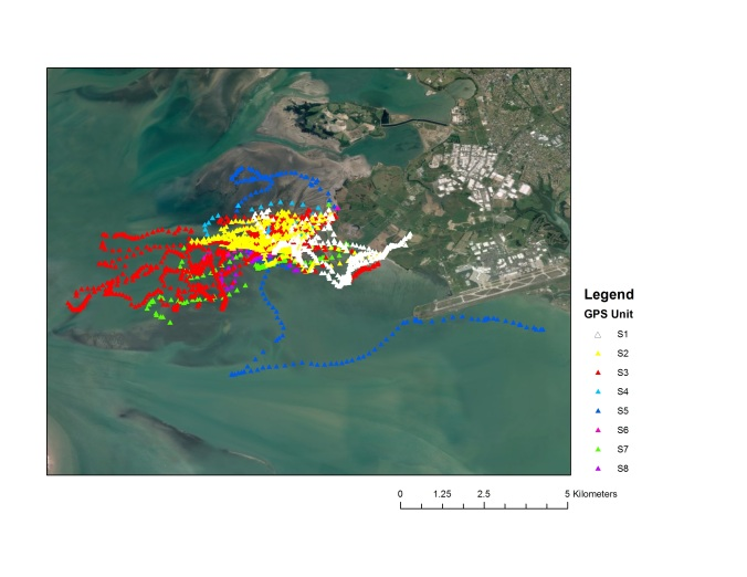 A lot of data - raw GPS locations from less than a week for my eight study birds in the Manukau Harbour