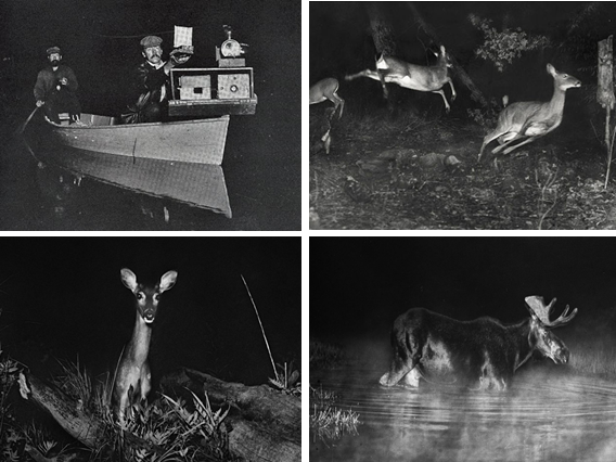 George Shiras III - Camera Trap Photos