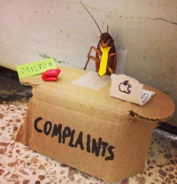 funny-pictures-humor-complaints-department-cockroach