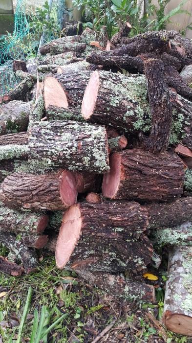 wood pile2