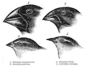 birds evo